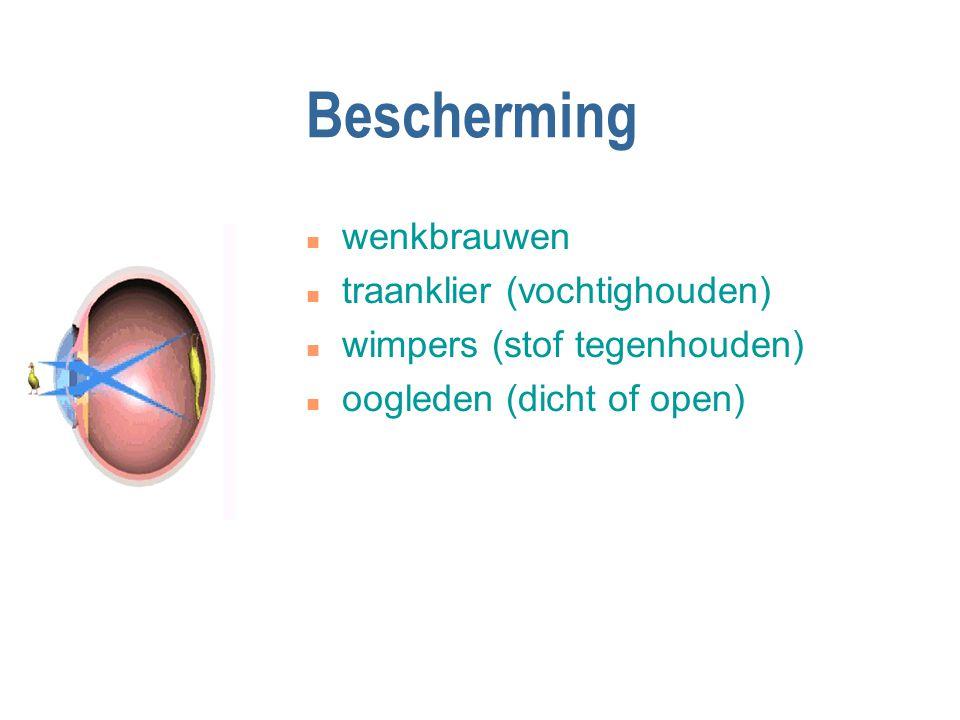 Bescherming n wenkbrauwen n traanklier (vochtighouden) n wimpers (stof tegenhouden) n oogleden (dicht of open)