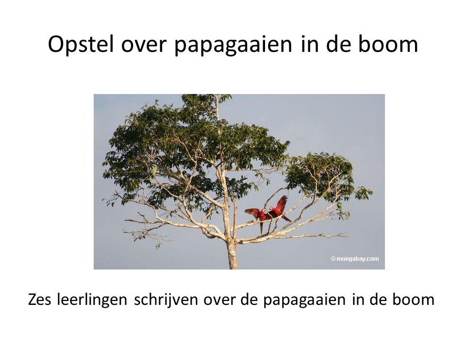 Opstel over papagaaien in de boom Zes leerlingen schrijven over de papagaaien in de boom