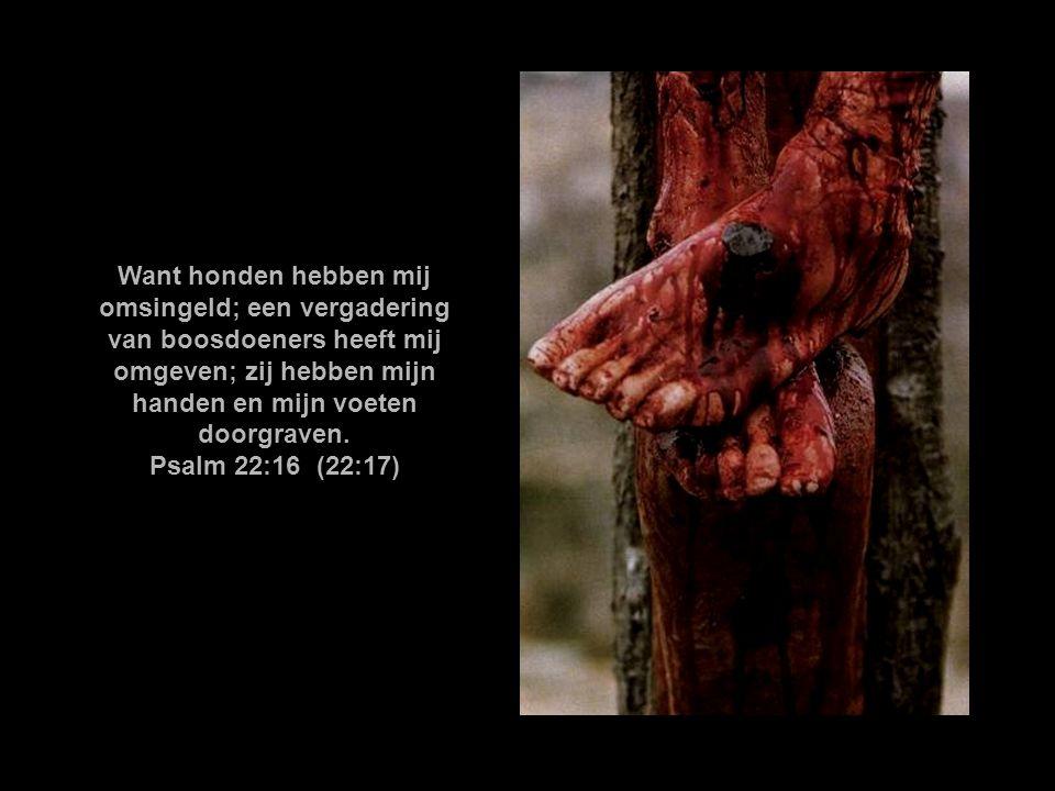 Jezus nu, ziende Zijn moeder, en den discipel, dien Hij liefhad, daarbij staande, zeide tot Zijn moeder: Vrouw, zie, uw zoon. Daarna zeide Hij tot den