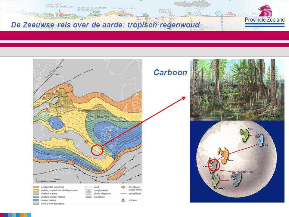 De Zeeuwse reis over de aarde: tropisch regenwoud Carboon