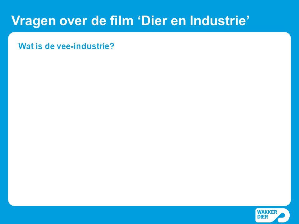 Wat is de vee-industrie? Vragen over de film 'Dier en Industrie'