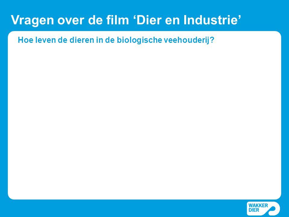 Hoe leven de dieren in de biologische veehouderij? Vragen over de film 'Dier en Industrie'