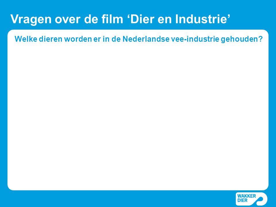 Welke dieren worden er in de Nederlandse vee-industrie gehouden? Vragen over de film 'Dier en Industrie'