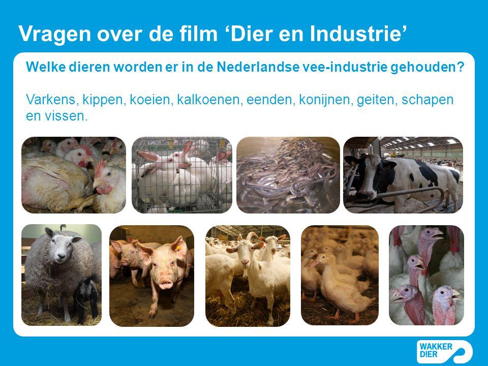 Welke dieren worden er in de Nederlandse vee-industrie gehouden? Varkens, kippen, koeien, kalkoenen, eenden, konijnen, geiten, schapen en vissen. Vrag