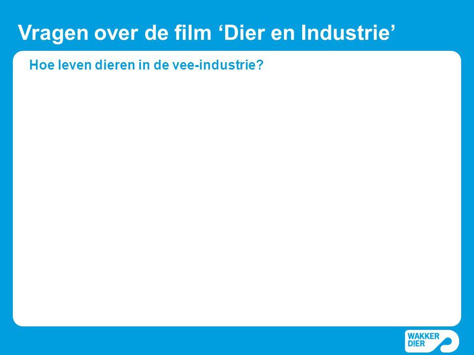 Hoe leven dieren in de vee-industrie? Vragen over de film 'Dier en Industrie'