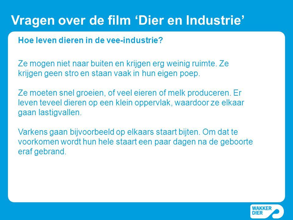 Hoe leven dieren in de vee-industrie? Vragen over de film 'Dier en Industrie' Ze mogen niet naar buiten en krijgen erg weinig ruimte. Ze krijgen geen