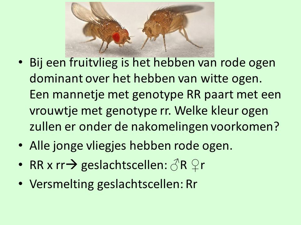 • Bij een fruitvlieg is het hebben van rode ogen dominant over het hebben van witte ogen. Een mannetje met genotype RR paart met een vrouwtje met geno