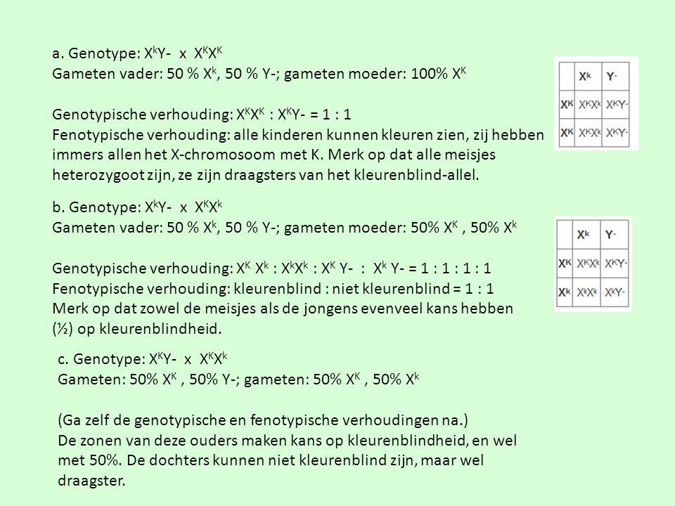 a. Genotype: X k Y- x X K X K Gameten vader: 50 % X k, 50 % Y-; gameten moeder: 100% X K Genotypische verhouding: X K X K : X K Y- = 1 : 1 Fenotypisch