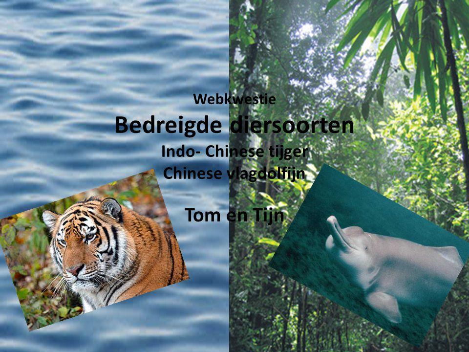 Webkwestie Bedreigde diersoorten Indo- Chinese tijger Chinese vlagdolfijn Tom en Tijn