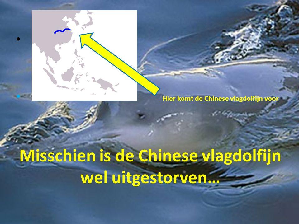 Misschien is de Chinese vlagdolfijn wel uitgestorven… • • Hier komt de Chinese vlagdolfijn voor