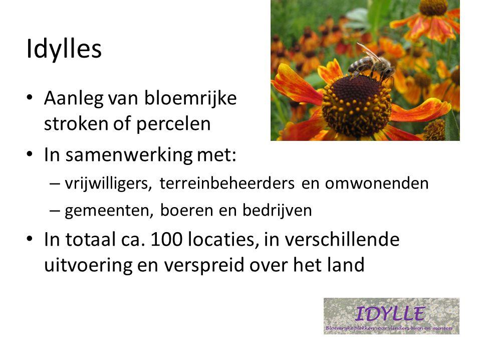 Idylles • Aanleg van bloemrijke stroken of percelen • In samenwerking met: – vrijwilligers, terreinbeheerders en omwonenden – gemeenten, boeren en bedrijven • In totaal ca.