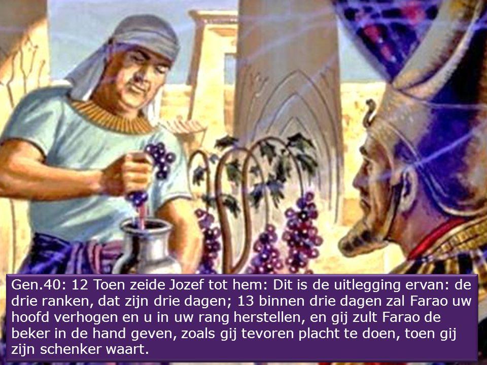 Gen.40: 9 In mijn droom, zie, er stond een wijnstok vóór mij. 10 Aan de wijnstok waren drie ranken, en nauwelijks begon hij te botten, of zijn bloesem