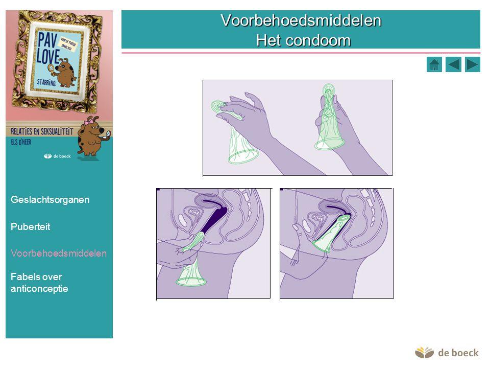 Voorbehoedsmiddelen Het condoom Geslachtsorganen Puberteit Voorbehoedsmiddelen Fabels over anticonceptie