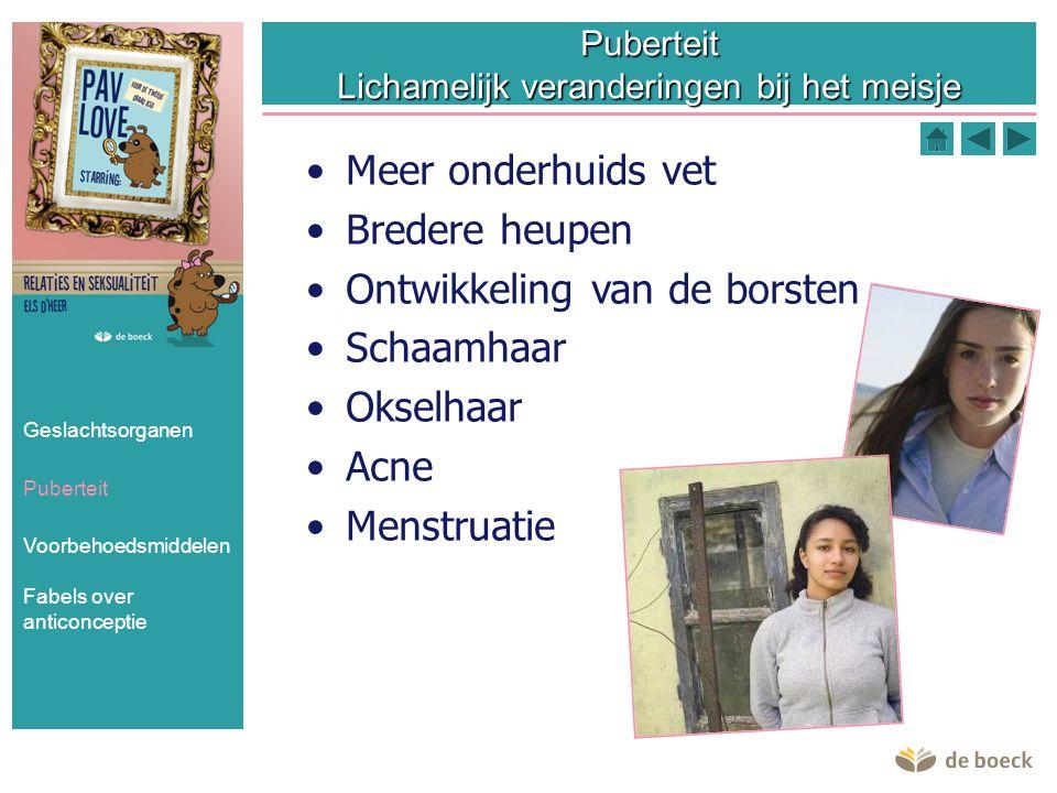 Geslachtsorganen Puberteit Voorbehoedsmiddelen Fabels over anticonceptie