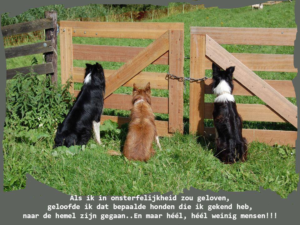 Honden houden van hun vrienden en bijten hun vijanden.