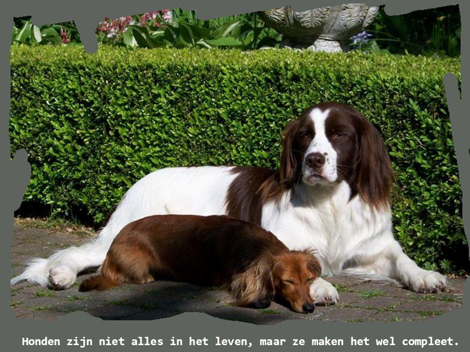 Vraag je je weleens af wat onze honden van ons denken.
