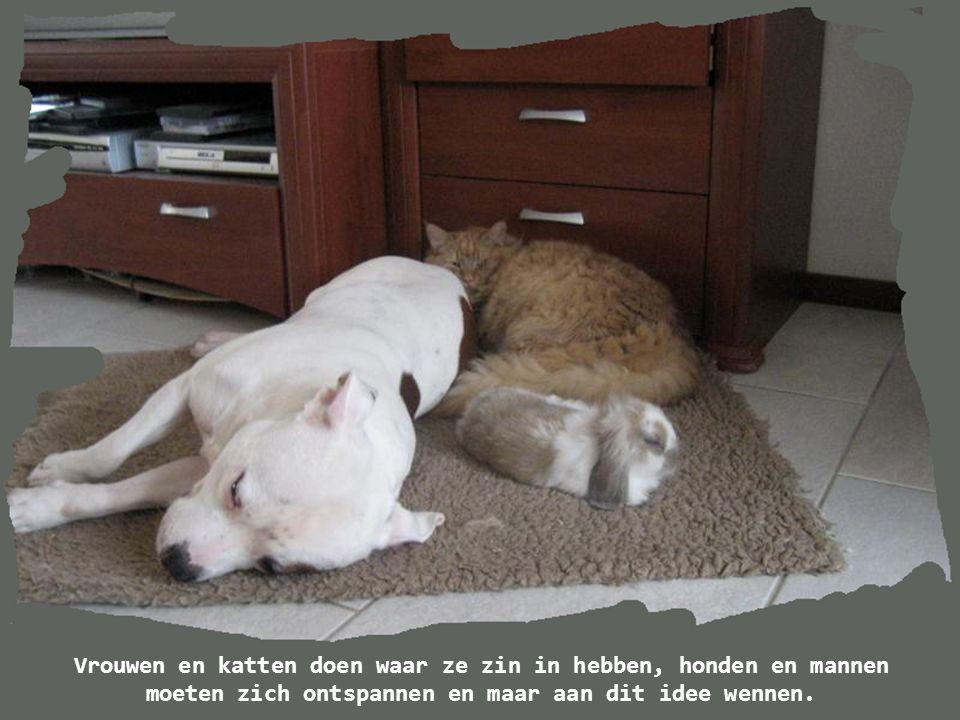 De reden waarom honden zoveel vrienden hebben, is omdat ze hun staart bewegen in plaats van hun tong.
