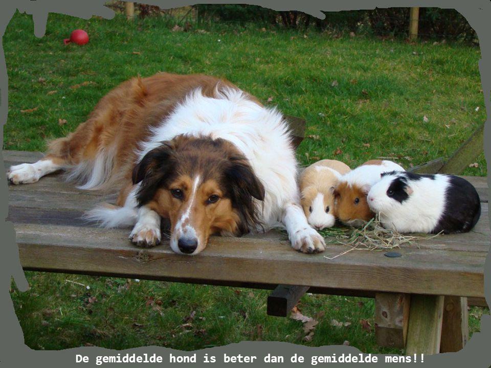 De bewondering van een hond voor jou, wil niet zeggen dat je ook echt geweldig bent…