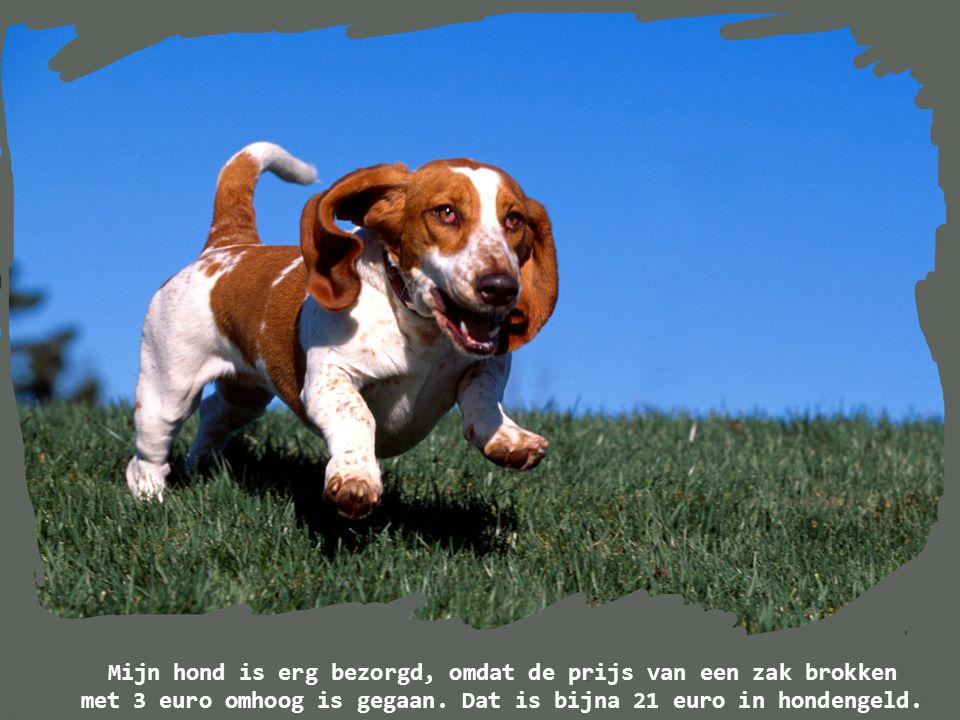 De gemiddelde hond is beter dan de gemiddelde mens!!