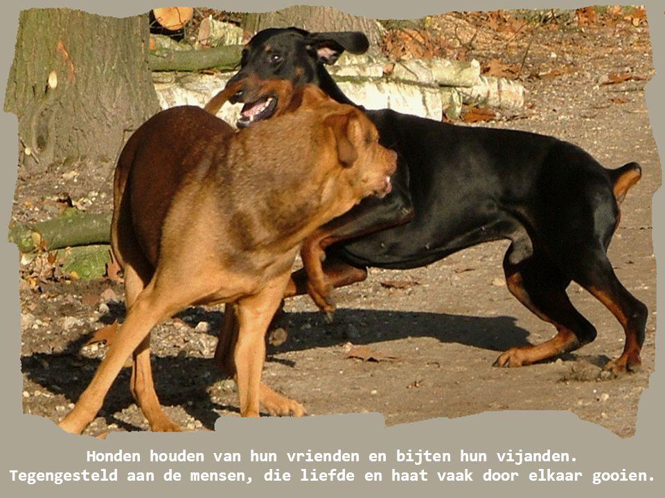 Ik vraag me weleens af, of de meeste honden naar poedels kijken alsof het leden zijn van een vreemde religieuze cultus.