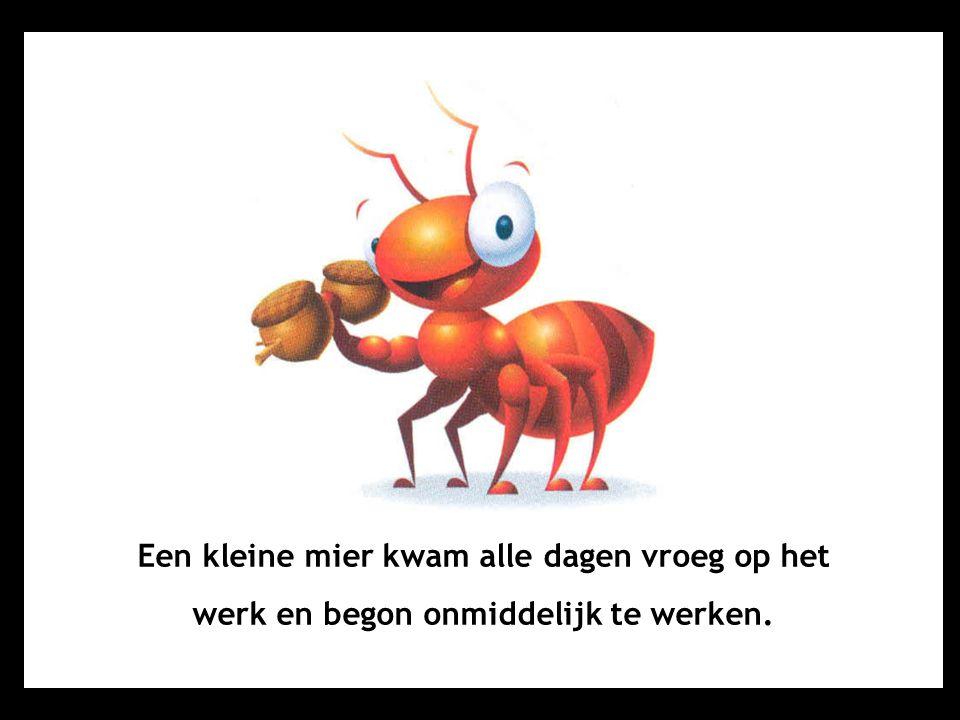 Een kleine mier kwam alle dagen vroeg op het werk en begon onmiddelijk te werken.