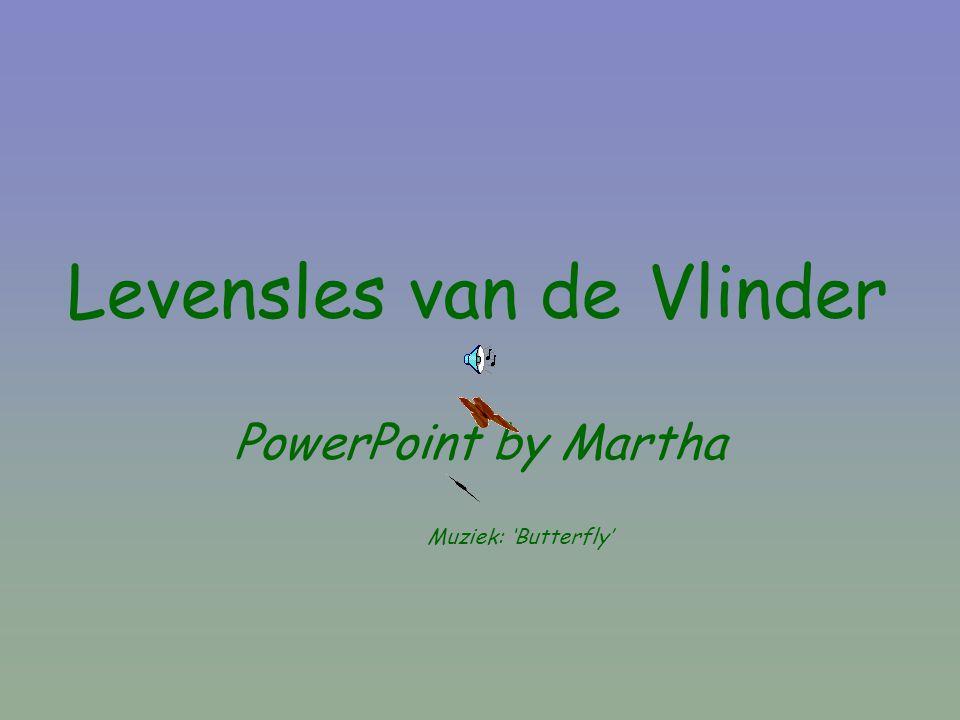 Levensles van de Vlinder PowerPoint by Martha Muziek: 'Butterfly'