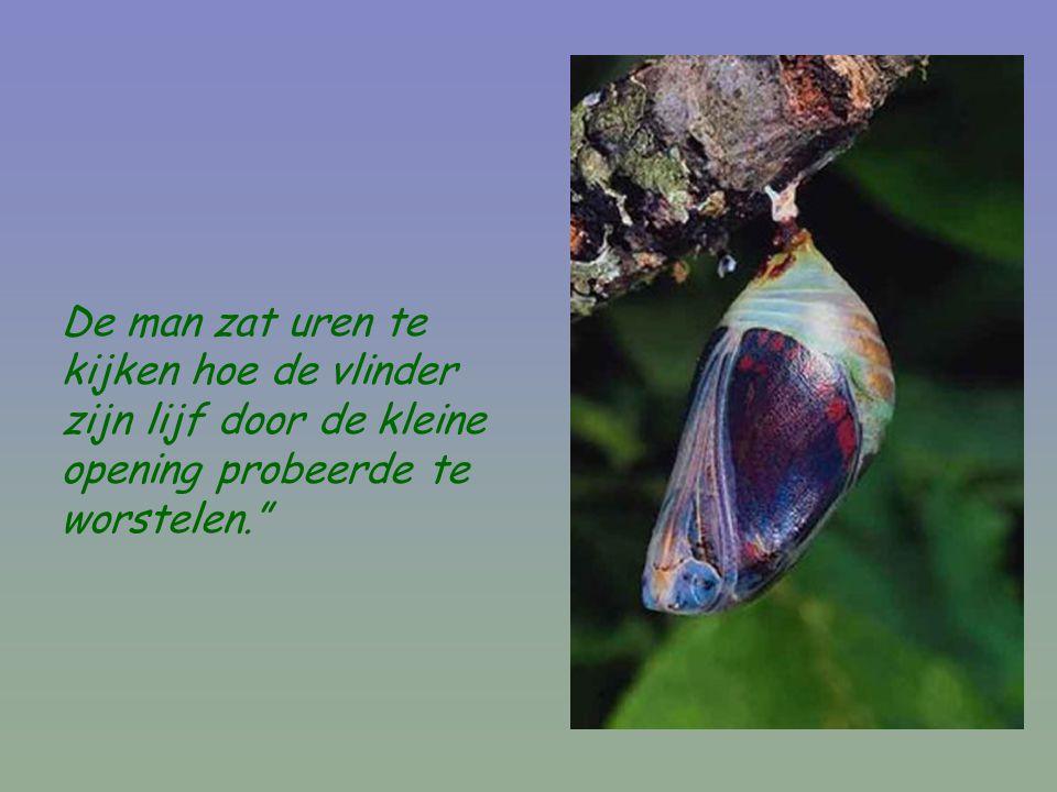 """De man zat uren te kijken hoe de vlinder zijn lijf door de kleine opening probeerde te worstelen."""""""