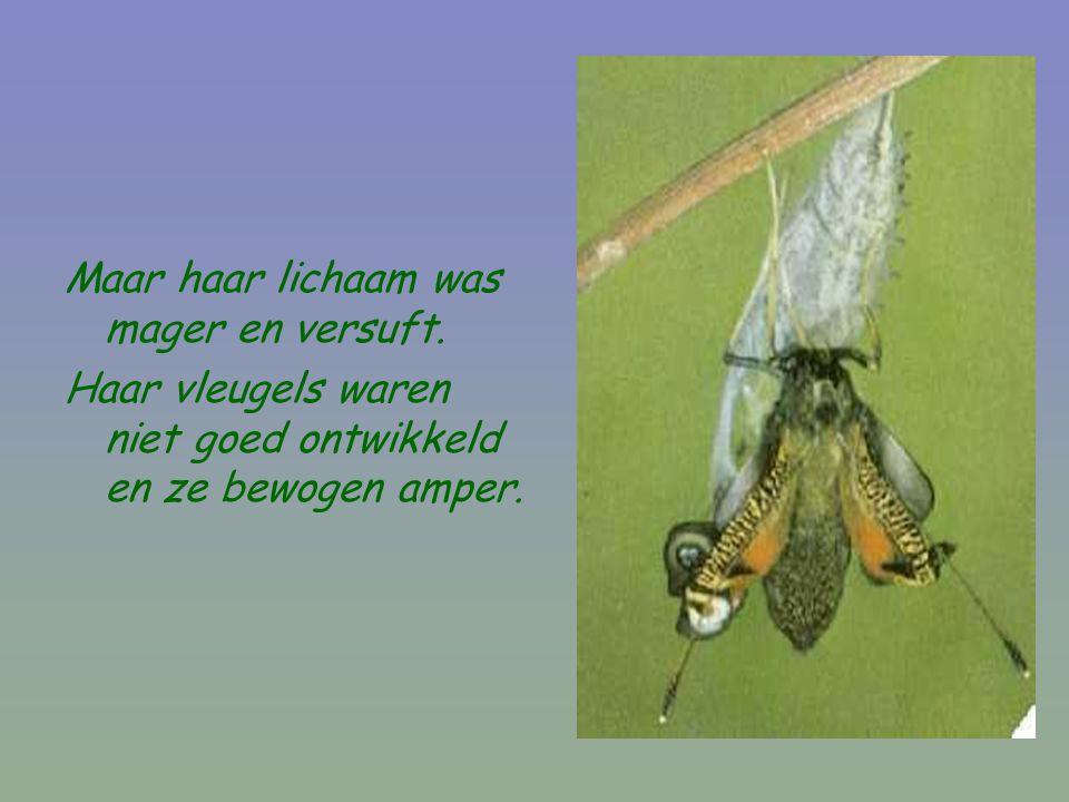 Maar haar lichaam was mager en versuft. Haar vleugels waren niet goed ontwikkeld en ze bewogen amper.