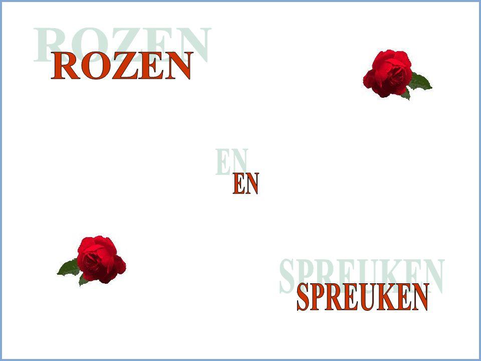 Er groeien op de wereld Miljoenen Rode Rozen Maar ook al geef ik al die rozen aan jou Dat kan nog niet zeggen Hoeveel ik van je hou