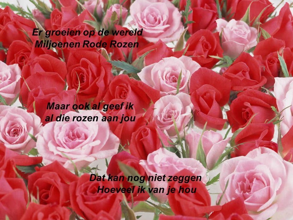 Als een Roos die langzaam Zijn einde bereikt, Zijn geur verliest Zo is het met de liefde Als je voor een ander kiest