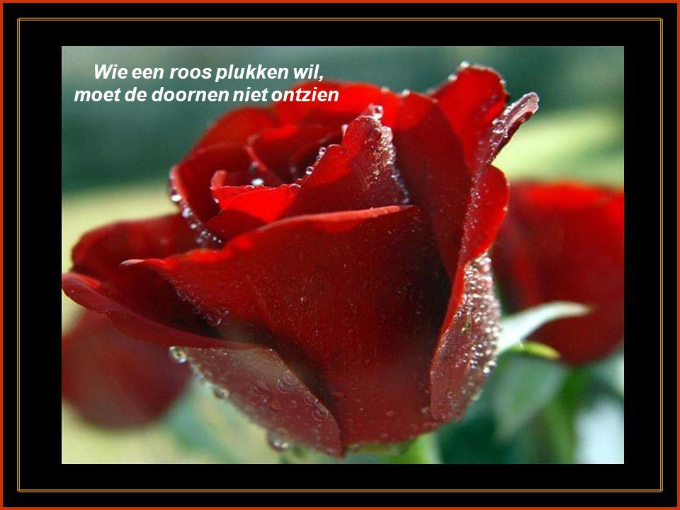 Wie een roos plukken wil, moet de doornen niet ontzien