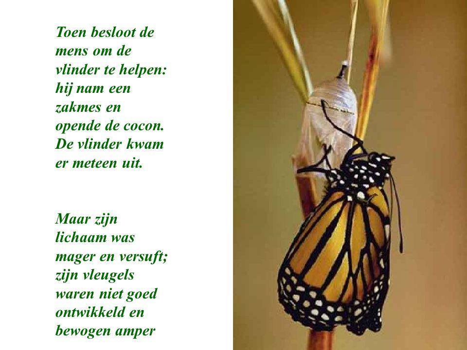 Toen besloot de mens om de vlinder te helpen: hij nam een zakmes en opende de cocon. De vlinder kwam er meteen uit. Maar zijn lichaam was mager en ver