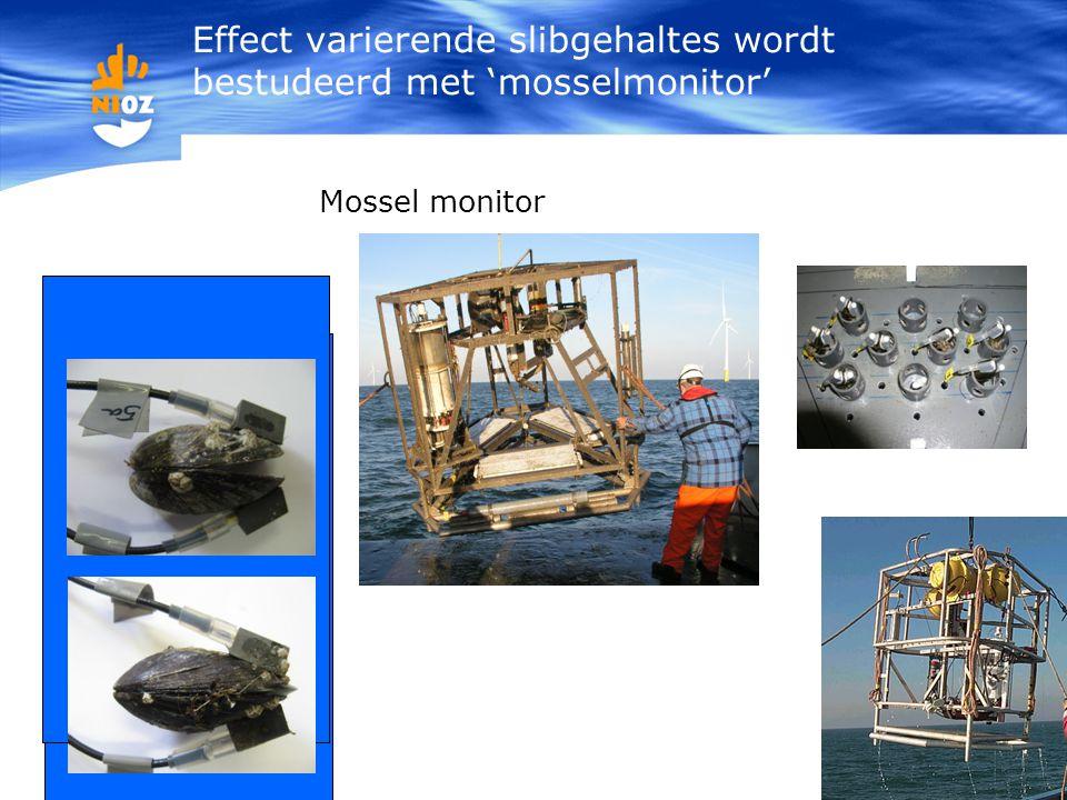 Effect varierende slibgehaltes wordt bestudeerd met 'mosselmonitor' Mossel monitor