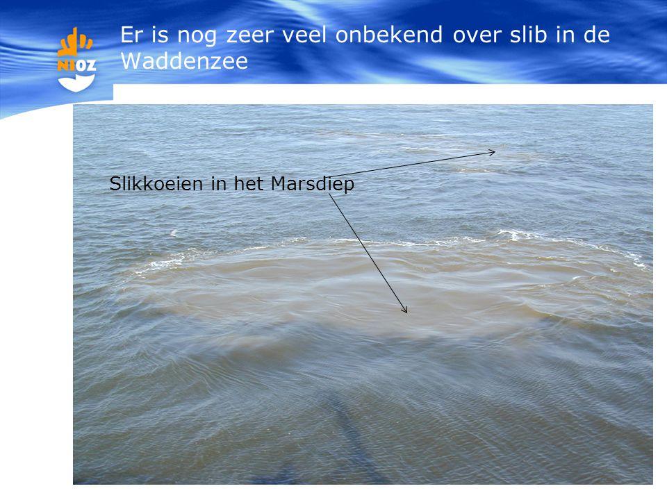Slikkoeien in het Marsdiep Er is nog zeer veel onbekend over slib in de Waddenzee