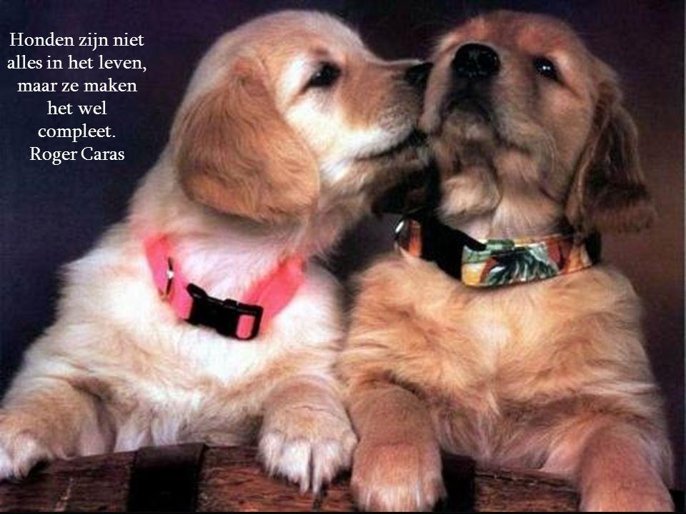 Honden houden van hun vrienden en bijten hun vijanden. Bijna tegengesteld aan de mensen, die ertoe neigen liefde en haat door elkaar te gooien. Sigmun
