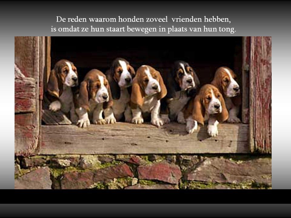 Honden zijn niet alles in het leven, maar ze maken het wel compleet. Roger Caras
