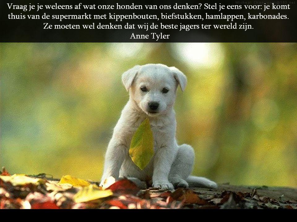 Ik vraag me weleens af, of de meeste honden naar Poedels kijken alsof het leden zijn van een vreemde religieuze cultus. Rita Rudner
