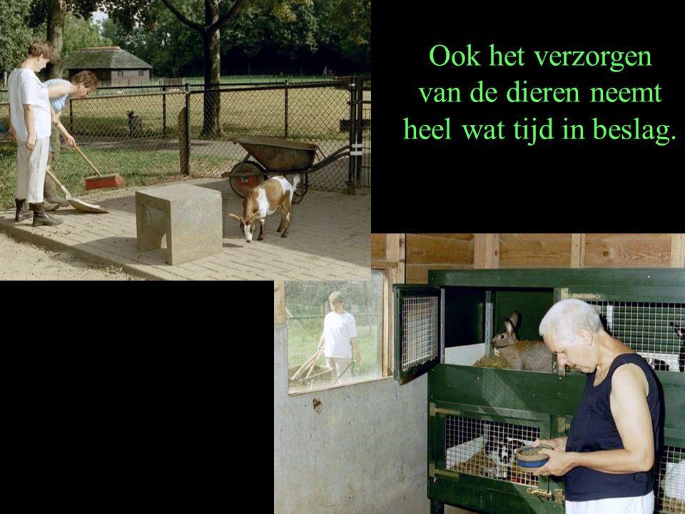 Ook het verzorgen van de dieren neemt heel wat tijd in beslag.