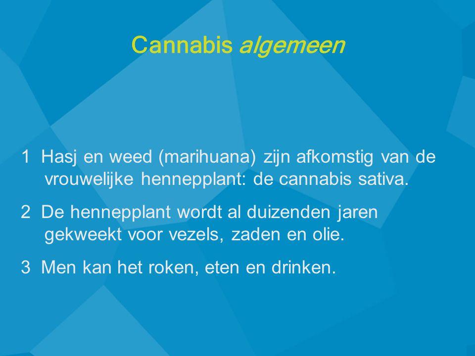 1 Hasj en weed (marihuana) zijn afkomstig van de vrouwelijke hennepplant: de cannabis sativa. 2 De hennepplant wordt al duizenden jaren gekweekt voor