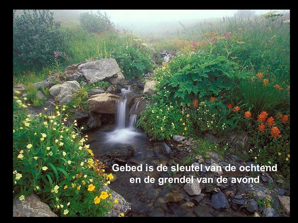 Geloof is als de roos die slechts bereikbaar is voor hen die ze durft te plukken