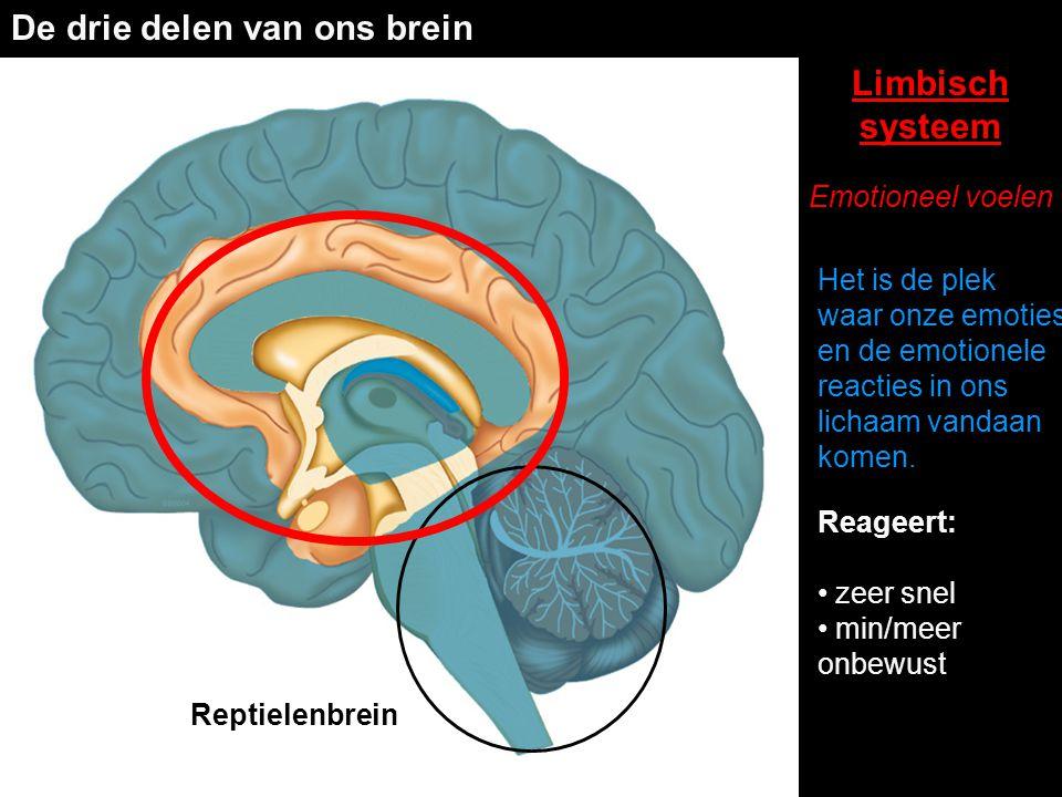 De drie delen van ons brein Reptielenbrein Limbisch systeem Emotioneel voelen Reageert: • zeer snel • min/meer onbewust Het is de plek waar onze emoti