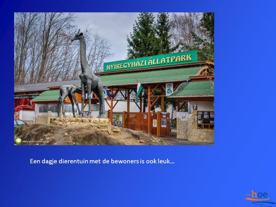 Een dagje dierentuin met de bewoners is ook leuk…