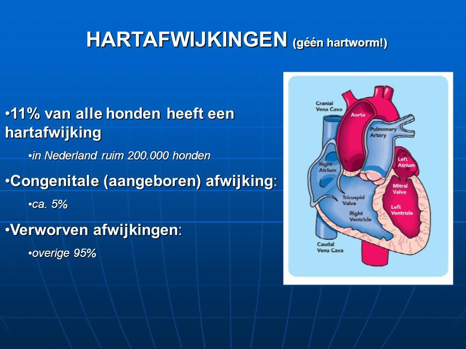 •11% van alle honden heeft een hartafwijking •in Nederland ruim 200.000 honden •Congenitale (aangeboren) afwijking: •ca.