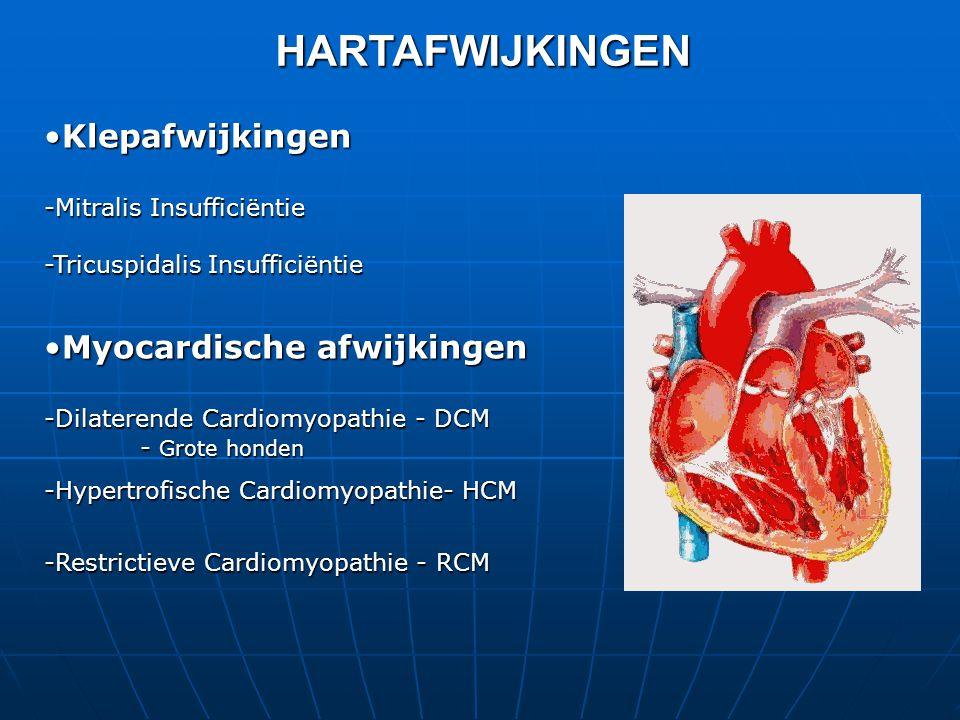 •Klepafwijkingen -Mitralis Insufficiëntie -Tricuspidalis Insufficiëntie •Myocardische afwijkingen -Dilaterende Cardiomyopathie - DCM - Grote honden -Hypertrofische Cardiomyopathie- HCM -Restrictieve Cardiomyopathie - RCM HARTAFWIJKINGEN