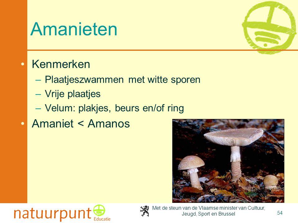 Met de steun van de Vlaamse minister van Cultuur, Jeugd, Sport en Brussel 54 Amanieten •Kenmerken –Plaatjeszwammen met witte sporen –Vrije plaatjes –V