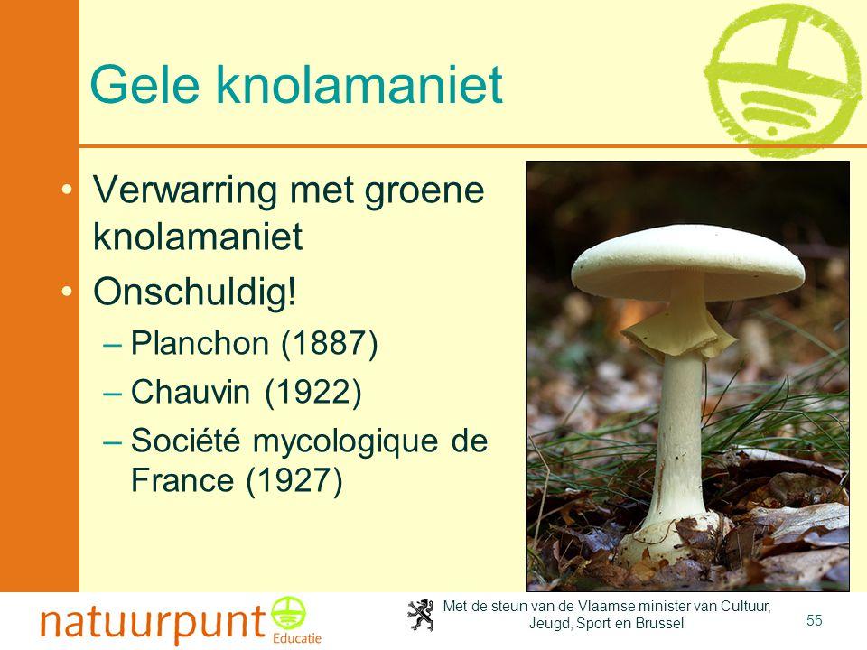 Met de steun van de Vlaamse minister van Cultuur, Jeugd, Sport en Brussel 55 Gele knolamaniet •Verwarring met groene knolamaniet •Onschuldig! –Plancho