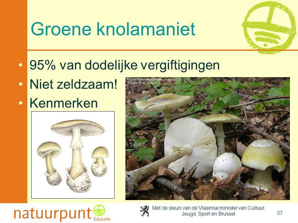 Met de steun van de Vlaamse minister van Cultuur, Jeugd, Sport en Brussel 57 Groene knolamaniet •95% van dodelijke vergiftigingen •Niet zeldzaam! •Ken