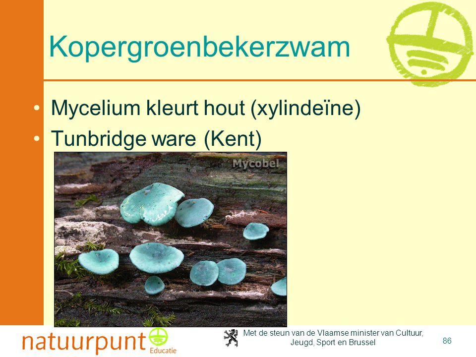 Met de steun van de Vlaamse minister van Cultuur, Jeugd, Sport en Brussel 86 Kopergroenbekerzwam •Mycelium kleurt hout (xylindeïne) •Tunbridge ware (K