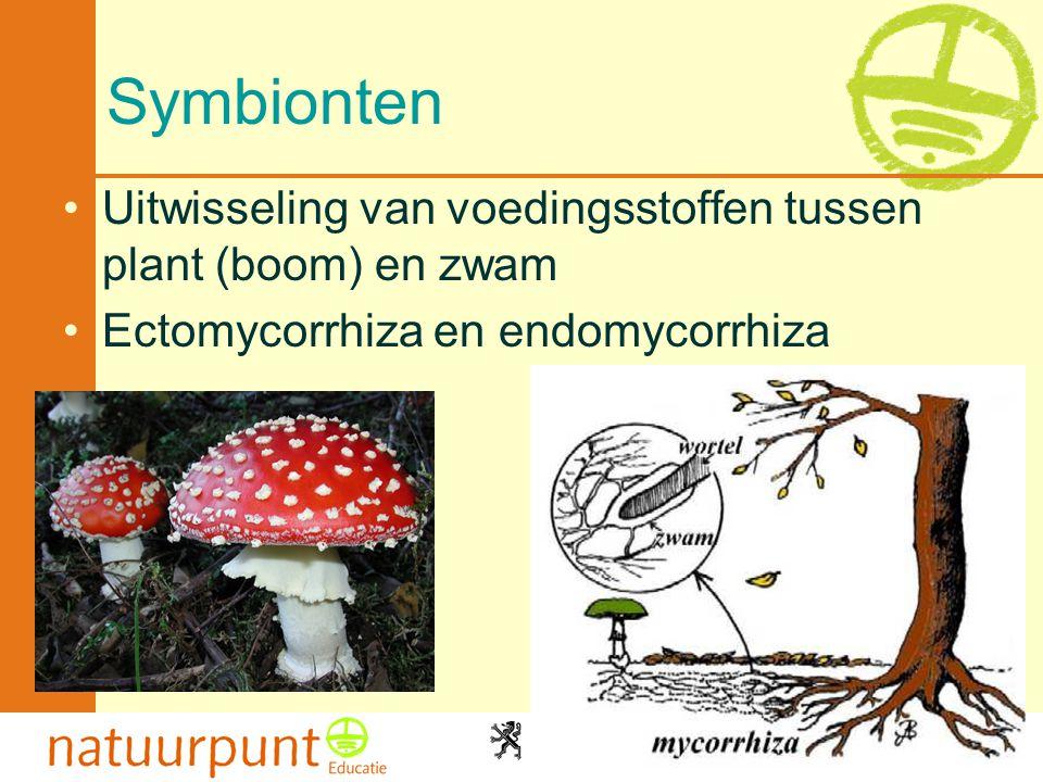 Met de steun van de Vlaamse minister van Cultuur, Jeugd, Sport en Brussel 9 Symbionten •Uitwisseling van voedingsstoffen tussen plant (boom) en zwam •