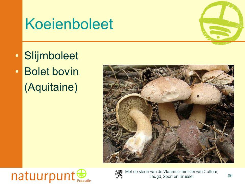 Met de steun van de Vlaamse minister van Cultuur, Jeugd, Sport en Brussel 96 Koeienboleet •Slijmboleet •Bolet bovin (Aquitaine)